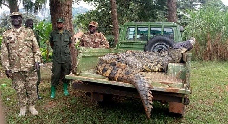Animal assombrou vila por décadas e foi levado para fazenda especializada em crocodilos