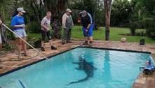 Casal encontra crocodilo de 3 metros na piscina na África do Sul