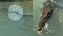 Crocodilo focinho-leve tenta roubar caranguejos de pescadoras
