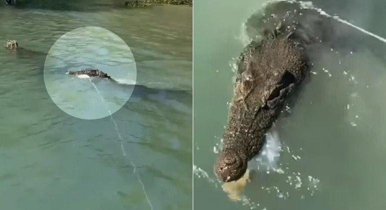 Um crocodilo sacana tentou roubar os caranguejos de pescadoras, no norte da Austrália
