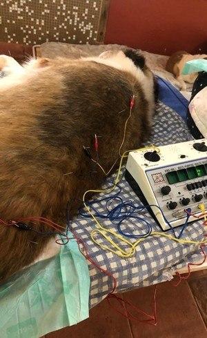 Cuidados veterinários são o primeiro passo do ciclo de resgate rumo à adoção