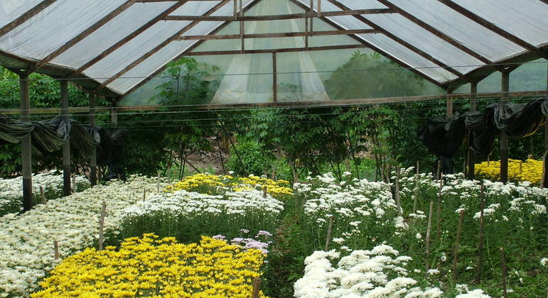 Cultivo de flores Pilões