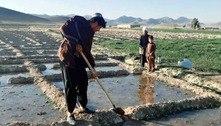 Preço do ópio dispara no Afeganistão após retorno do Talibã