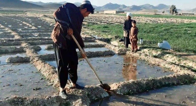 Um agricultor cultivando papoula (flor a partir da qual o ópio é feito) na cidade de Helmand