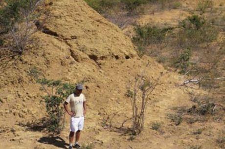 Colônia de cupins tem montes com nove metros de altura