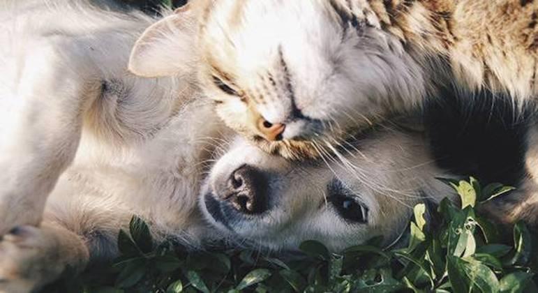 Adotar uma animal de estimação traz junto muita responsabilidade