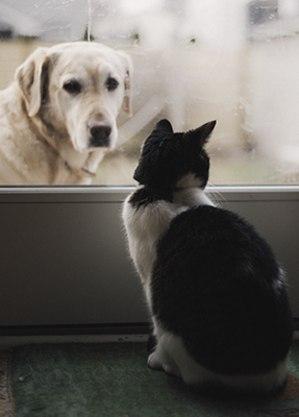 Cão ou gato, o que vale é o carinho!