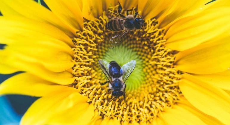 Polinização realizada pelas abelhas é conhecida como melitofilia