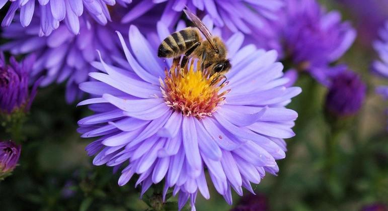 Agrotóxicos podem afetar a busca das abelhas por água e alimentos