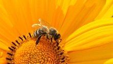 Entenda a importância das abelhas para a biodiversidade do planeta