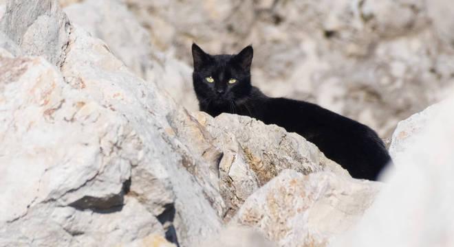 Curiosidades sobre gatos - 60 fatos sobre vida e hábitos dos felinos