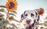 O espírito aventureiro do cãozinho conquistou o coração dos seus milhares de seguidores, que adoram acompanhar seu dia a dia de diversão
