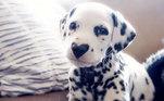 Wiley foi adotado em 2019, na época Lexi havia se apaixonado pelo sinal no nariz do cachorro, mas não sabia se a mancha continuaria igual quando ele crescesse. Mesmo assim, ela o levou para casa e deu a ele um novo lar