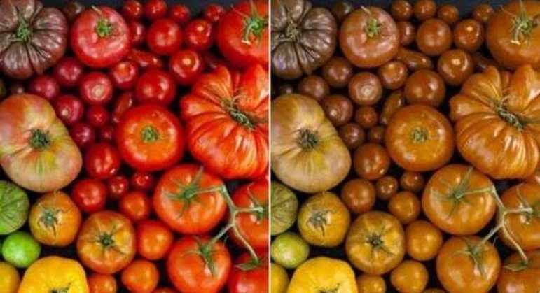 À esquerda a visão normal, à direita a visão dos daltônicos