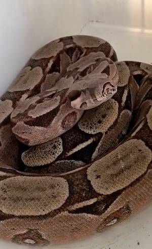 Cobra 'visitou' casa de Ivete