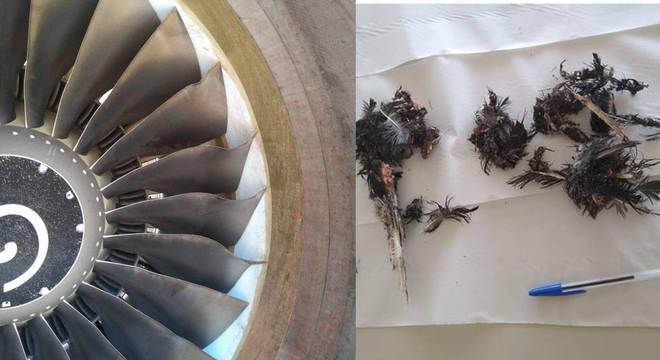 Danos no motor e restos da ave recolhidas após o pouso de precaução