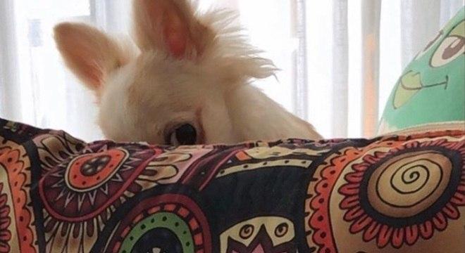 Dany Bananinha mostrou seu teste de gravidez e sua cachorra