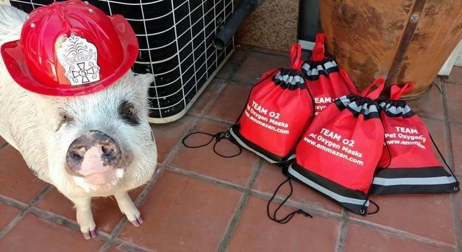 Máscaras podem ser usadas por cães, gatos, hamsters, porcos e outros bichos