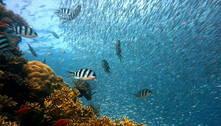 Unesco alerta sobre a situação do frágil ecossistema marinho