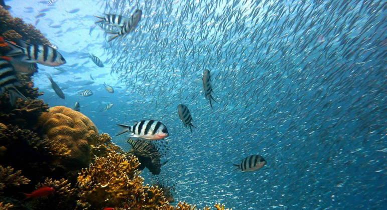 Década dos Oceanos tenta proteger biodiversidade marinha