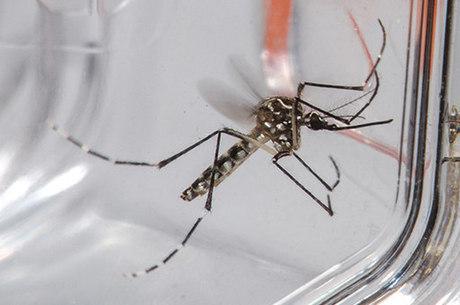 Minas já tem 289 mil casos prováveis de dengue