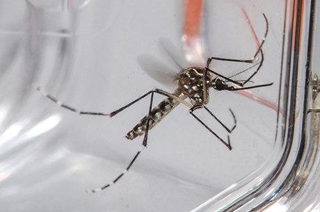 Dengue chega a 372 mil casos em Minas