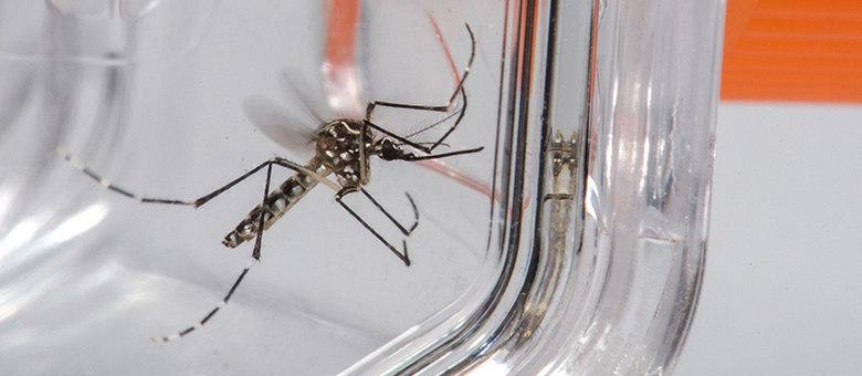 Casos prováveis de dengue passam de 247 mil em todo o Estado