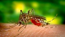 Vigilância pede atenção no combate ao mosquito da dengue em SP