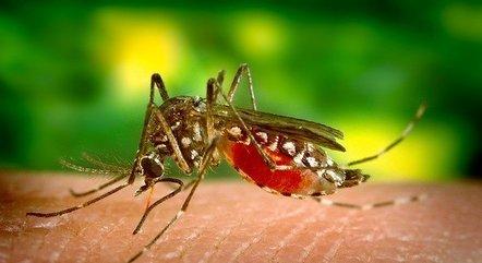 Casos de dengue devem subir nos próximos dois anos