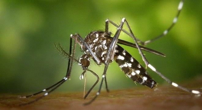 Substância criada por pesquisadores mata larvas do mosquito em até 48 horas