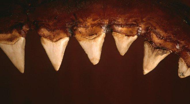 A análise forense de padrões de mordida de tubarão está ajudando a revelar mais sobre as espécies responsáveis pelos ataques