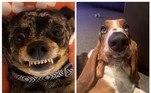 Uma brincadeira no Facebook tem feito a alegria de internautas apaixonados por cães. O desafio #noupperlipchallenge, que significa