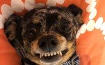 Diga X! E este cãozinho arrasou na selfie, melhor que muita blogueira por aí