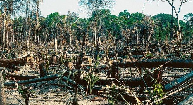Desmatamento acelerou se levarmos em consideração as taxas dos últimos 18 anos