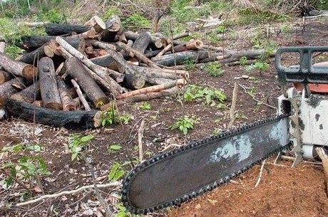 Força Nacional vai combater desmatamento