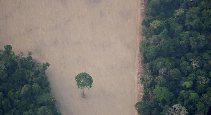 O plano Amazônia tem metas de redução do desmatamento e combate a outros ilícitos ambientais