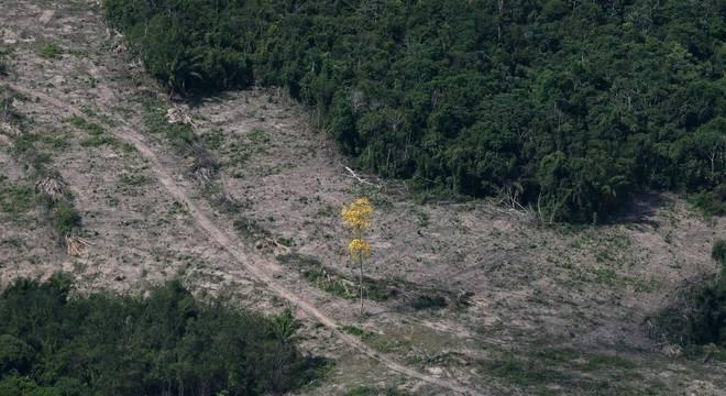 Vista aérea mostra área desmatada da Amazônia no município de Itaituba, no Pará