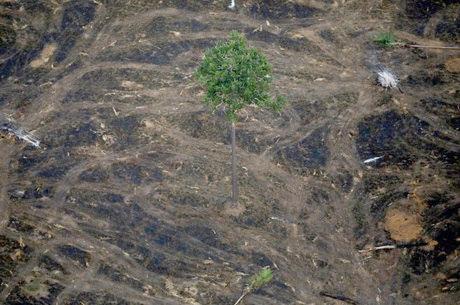 Área desmatada é próxima de 10 mil Km²