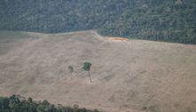 Desmatamento na Amazônia salta ao maior nível em 12 anos, diz Inpe