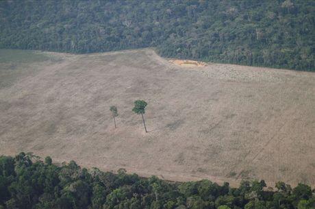 Pará, sozinho, desmatou 5.192 km² de floresta
