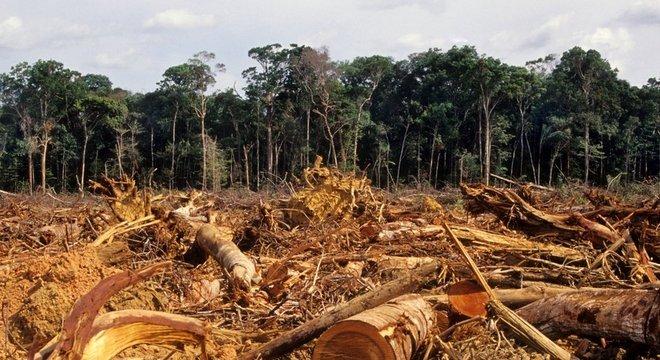 De agosto de 2019 a julho de 2020, 11.088 km² de floresta foram perdidos