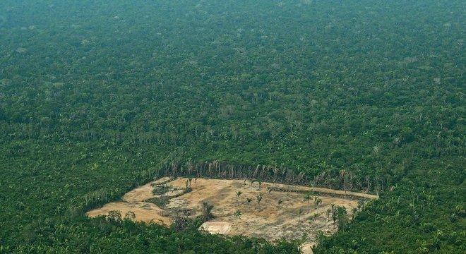 Amazônia perdeu 50 mil km² de matas nos últimos 7 anos