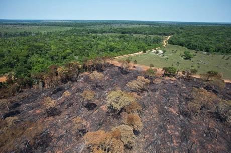 Desmatamento da floresta Amazônica