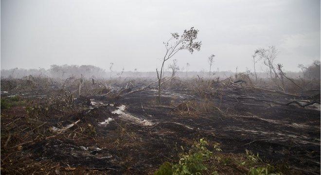 O desmatamento é um grande problema no México