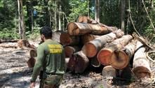 Ação da PF combate exploração ilegal de madeira na Amazônia