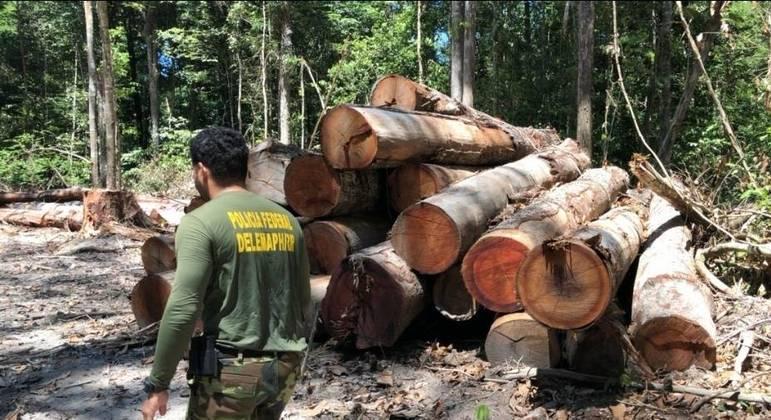 Ação da PF combate exploração ilegal de madeira na floresta Amazônica