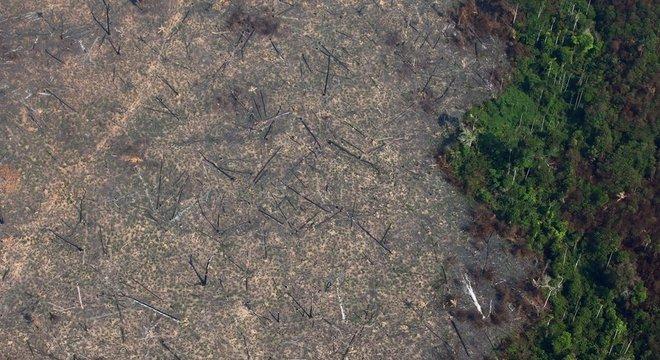 Em junho e agosto, o desmatamento da Amazônia cresceu 203% em relação ao mesmo período do ano passado, segundo o Inpe.