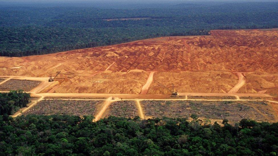 A destruição da vegetação nativa e as mudanças climáticas vão prejudicar diretamente o agronegócio no Brasil