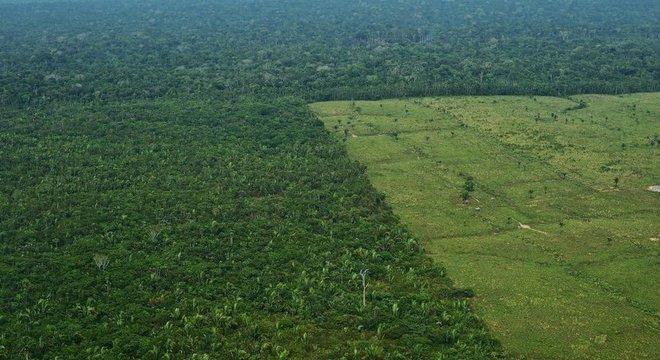 Desmatamento para pasto na Amazônia