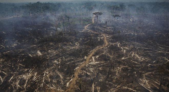 Área desmatada para abertura de pasto em  Novo Progresso, no Pará